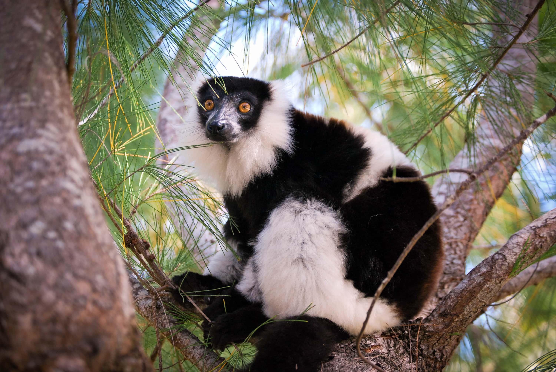 Cosa vedere in Madagascar: itinerario di 3 settimane nell' isola dei lemuri