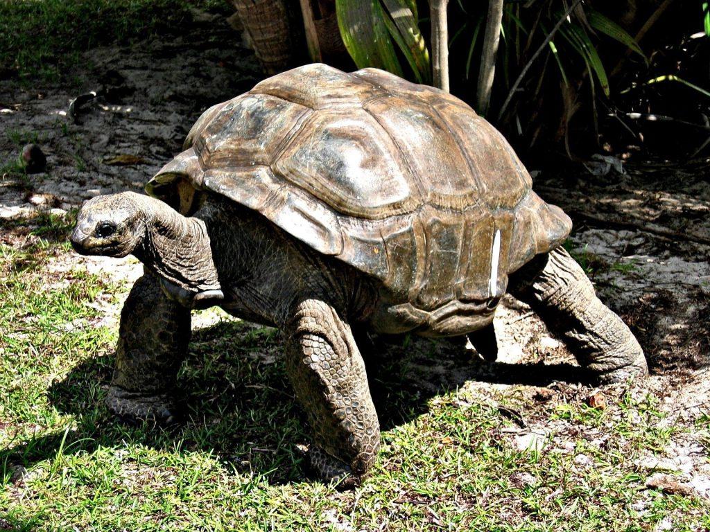 Escursioni a zanzibar: tartarughe giganti