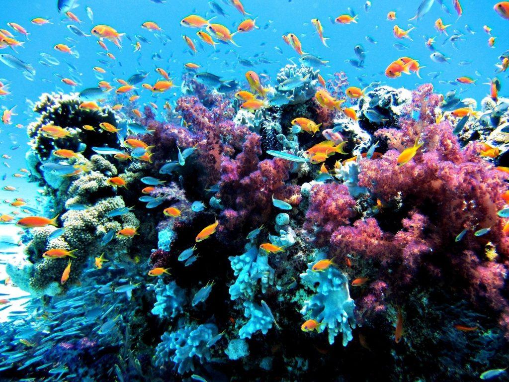 Escursione a Zanzibar, barriera corallina