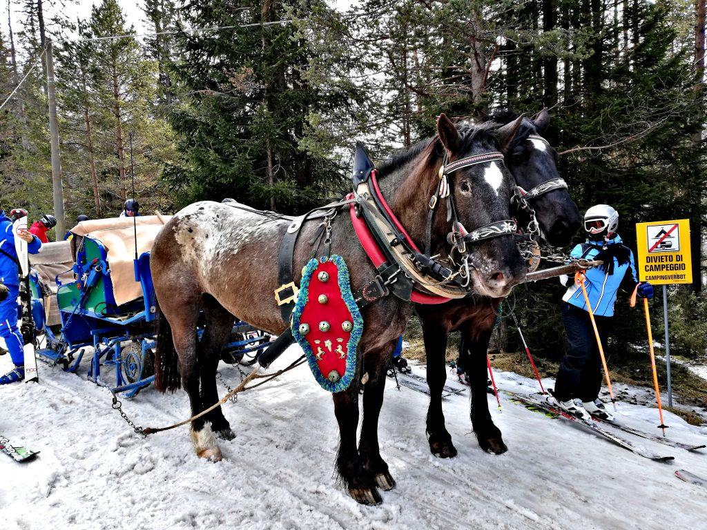Giro della grande guerra traino cavalli