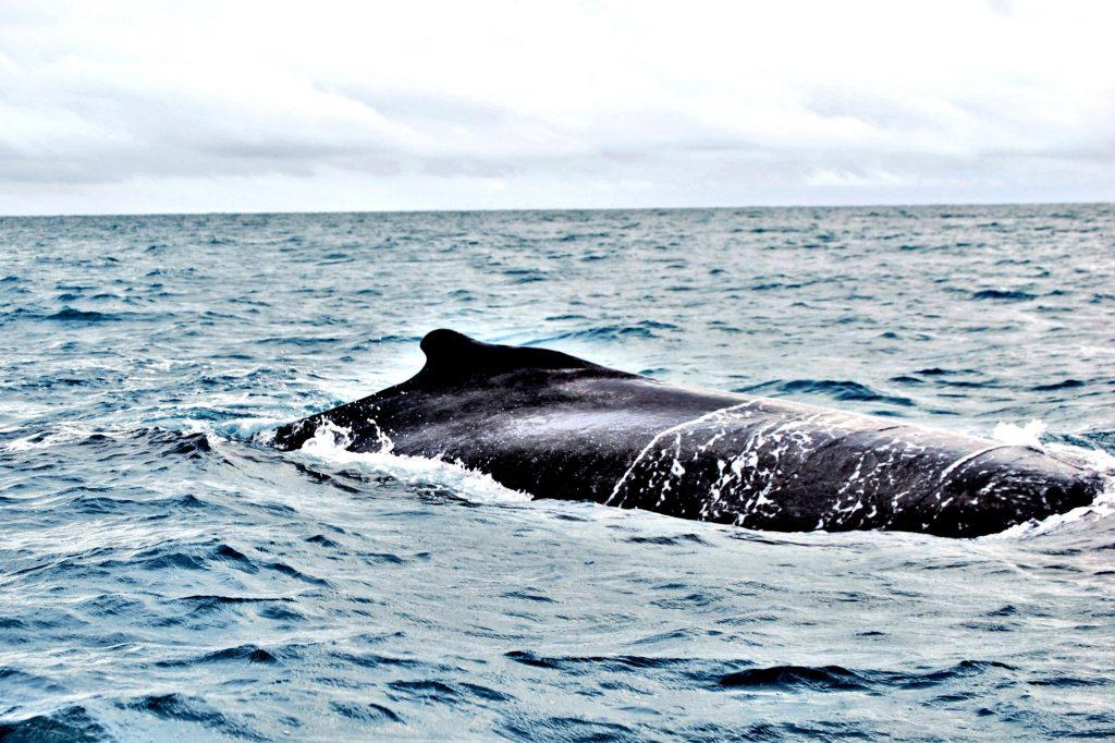 Osservare balene Madagascar