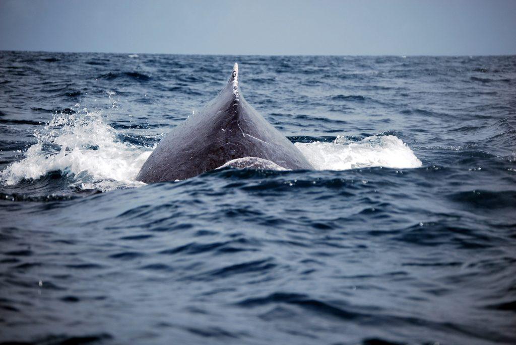 Dove vedere le balene in Madagascar