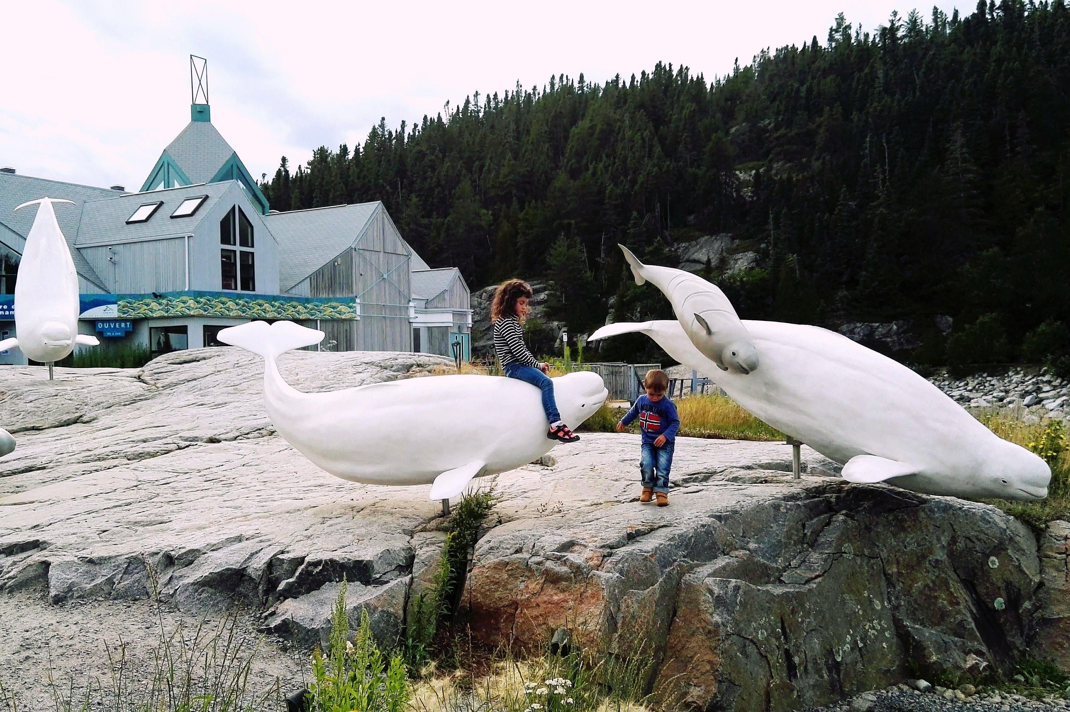 Vedere le balene a Tadoussac... Anche quelle finte!