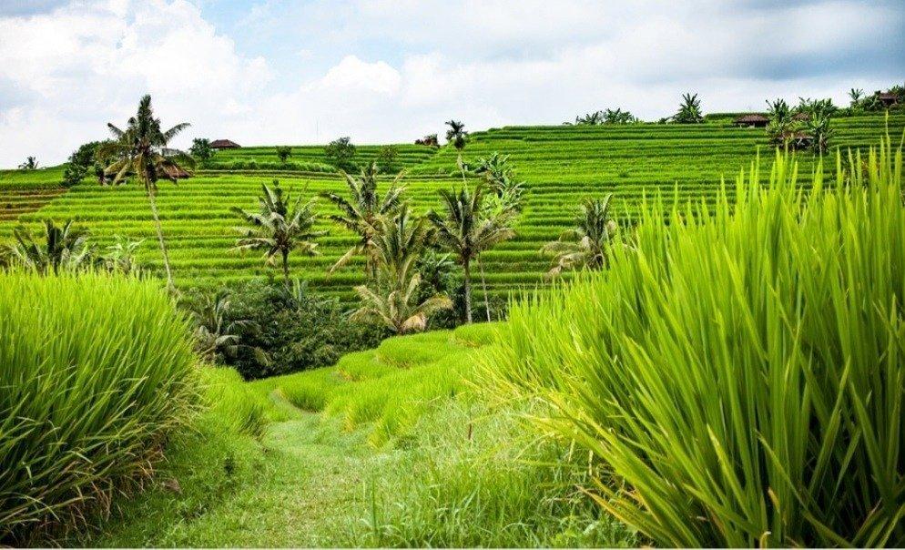 Risaie Bali dove andare d' estate in vacanza