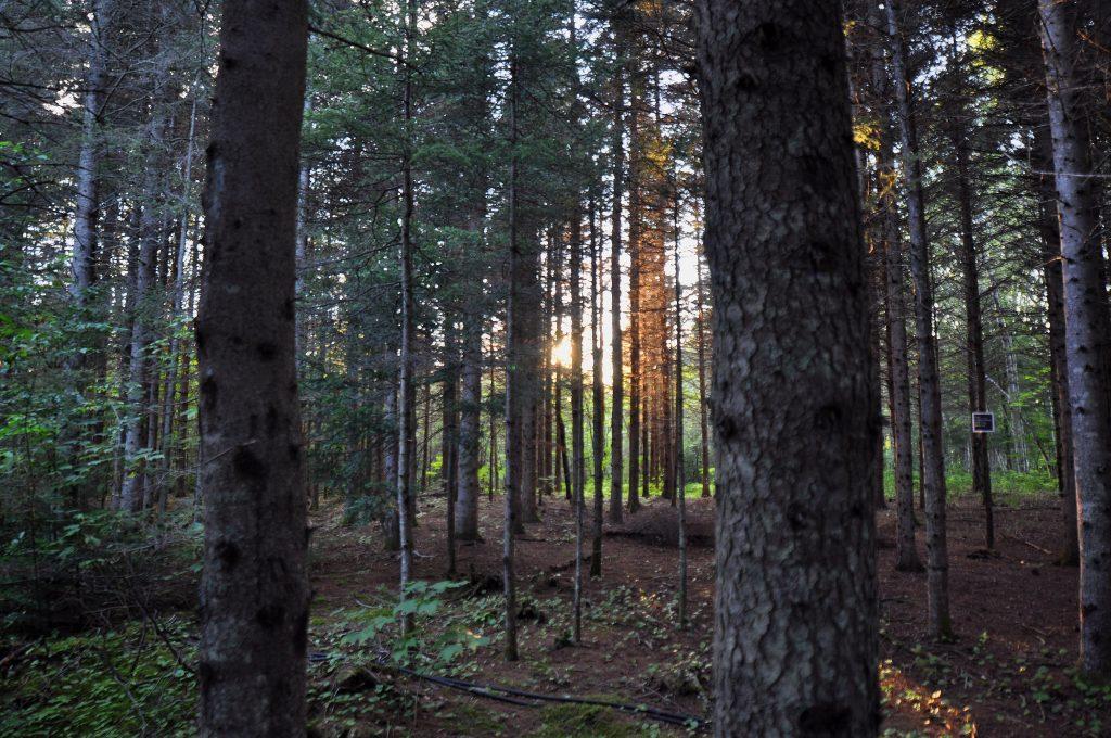 Digital detox foresta canada