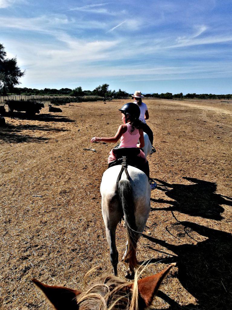 Camargue cosa vedere cavalli