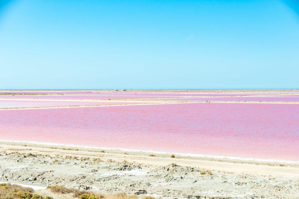 mare rosa salin-de-giraud