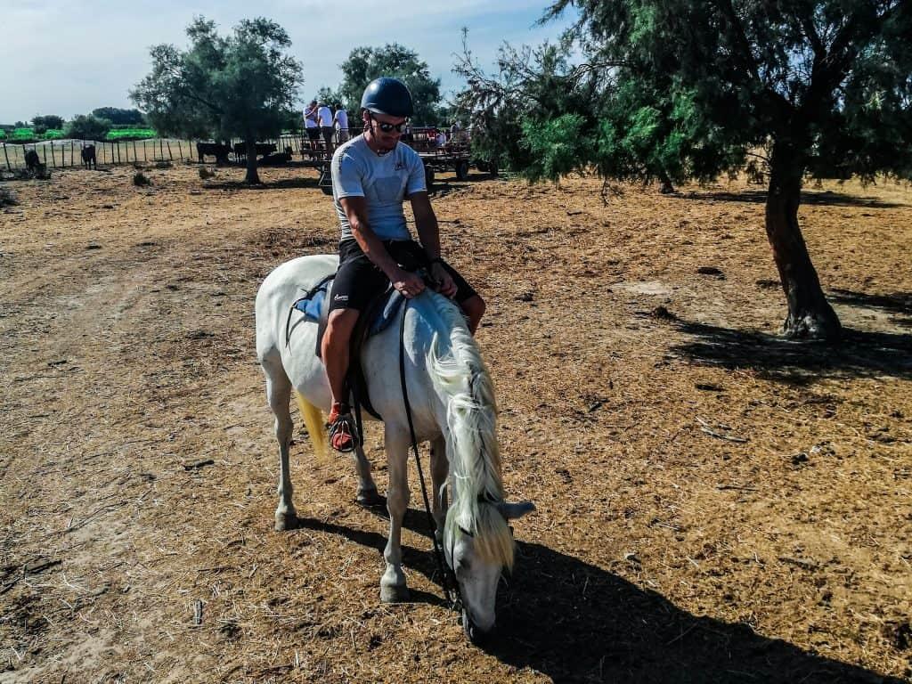Camargue a cavallo papà