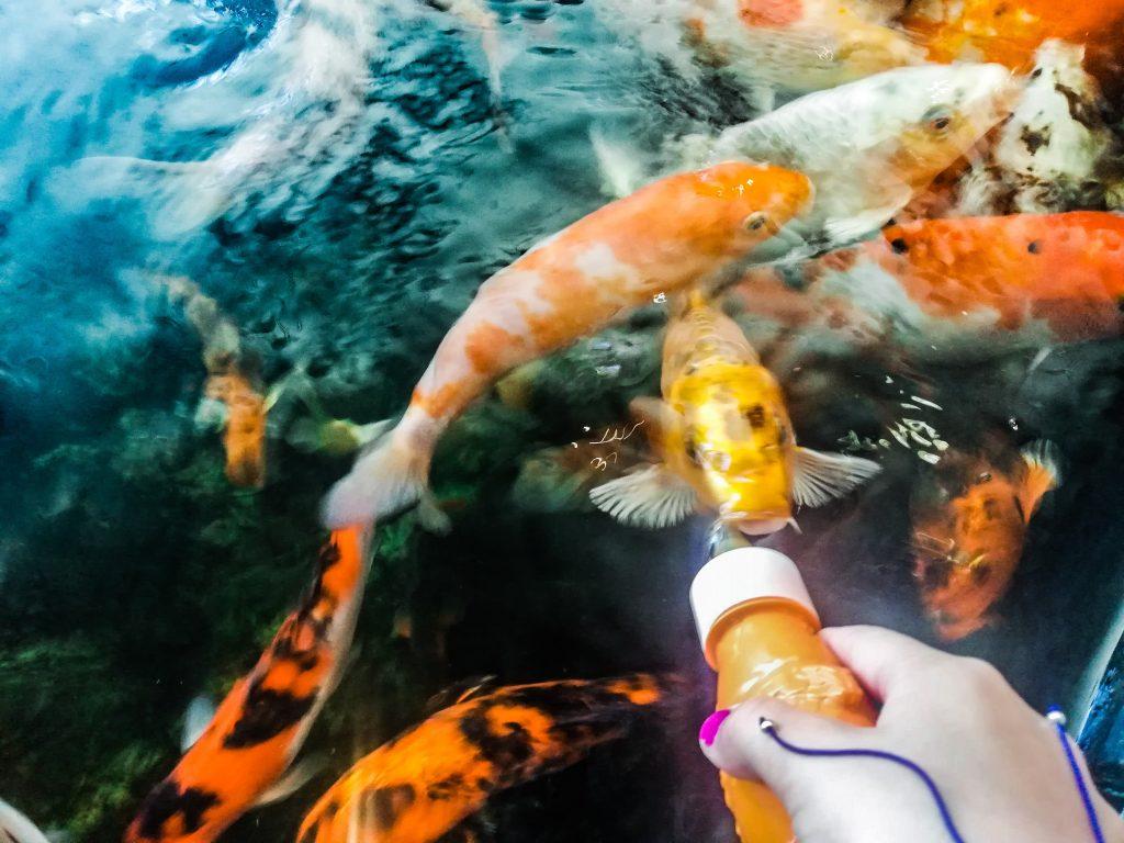 Cosa vedere a barcellona con i bambini acquario