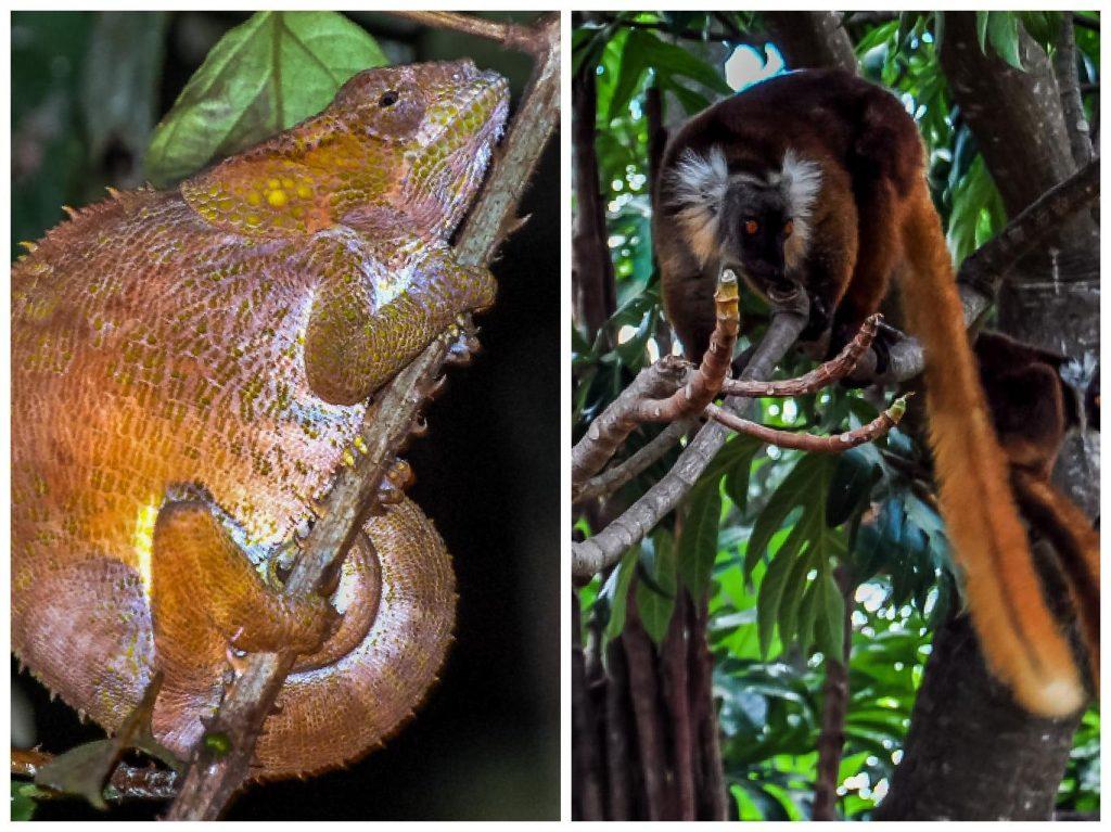 periodo migliore per andare in Madagascar