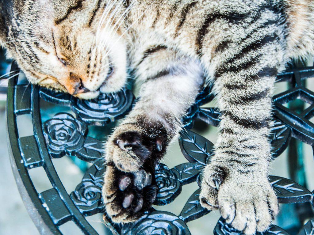 Cosa vedere a key West gatti