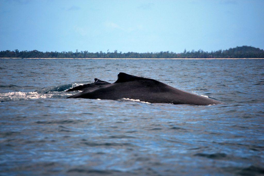 Madagascar balene quando andare