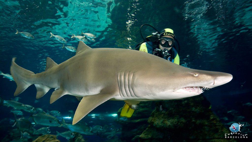 barcellona aquarium squali